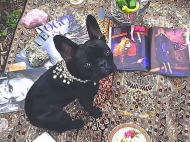 Lady Gaga va lancer une ligne de vêtements, accessoires et nourriture pour chien