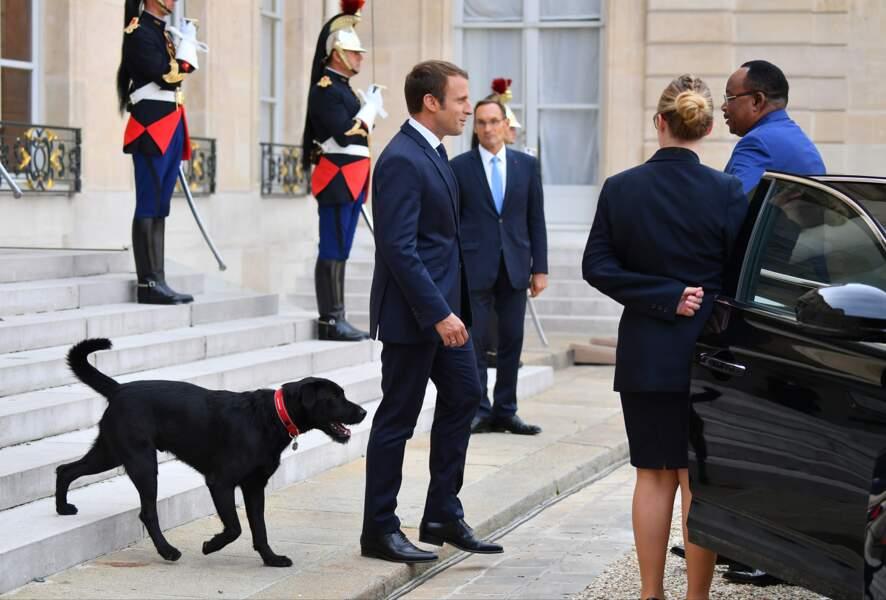 Nemo, le chien de Brigitte et Emmanuel Macron, fait ses premiers pas devant les photographes à l'Elysée