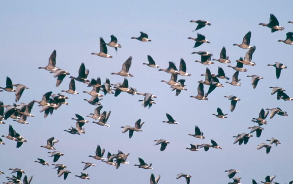des oiseaux !