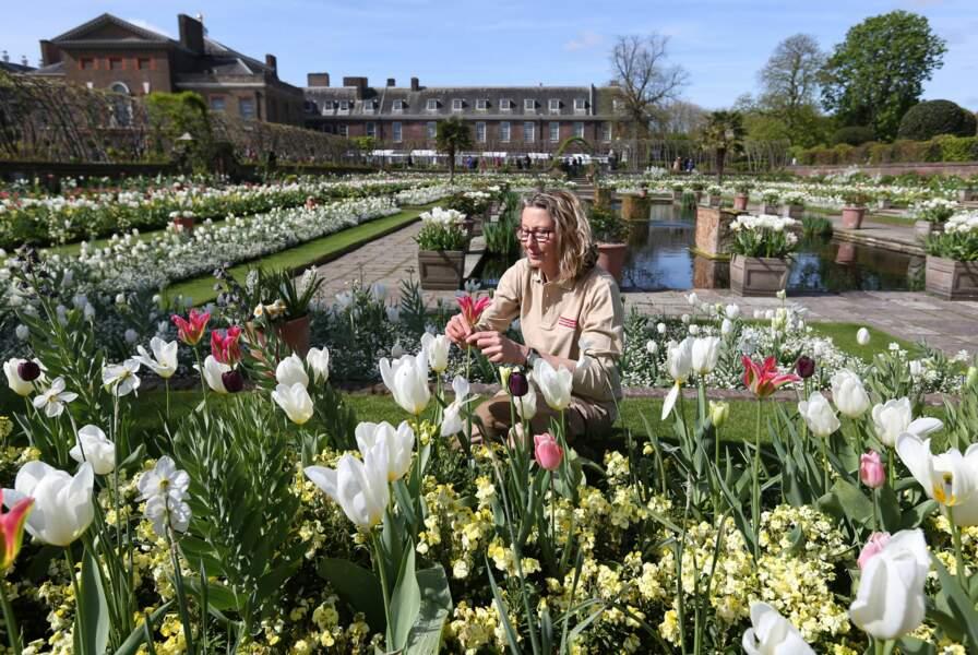 Lady Diana a été mise à l'honneur avec ce jardin