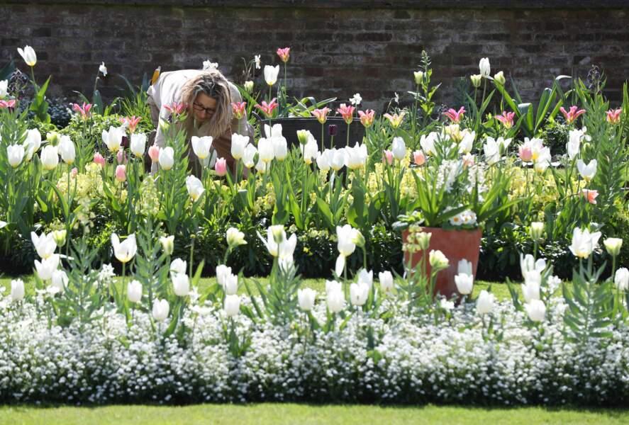 Les horticulteurs se sont inspirés des tenues portées par Lady Diana pour choisir les fleurs