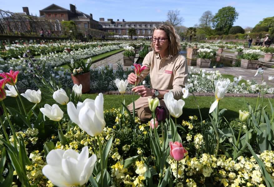 Les jardiniers de Kensington ont voulu rendre hommage à leur façon à Lady Diana