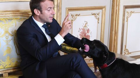Emmanuel Macron : la surprenante technique pour calmer son chien Nemo pendant son absence