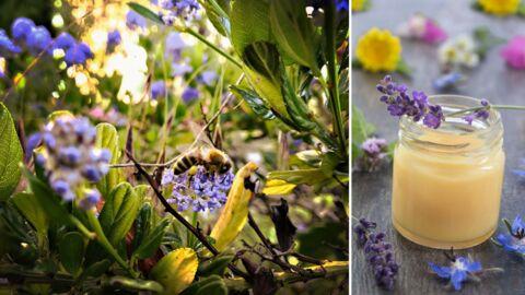 5 façons d'utiliser la propolis, la substance récoltée par les abeilles (la 4ème va vous étonner)