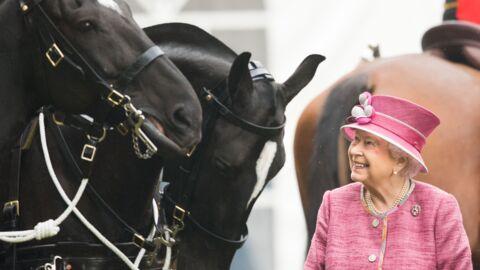 La reine Elizabeth II: ses chevaux de courses lui rapportent une véritable fortune