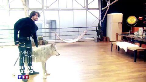 Danse avec les stars 8: une séquence avec un loup fait polémique, elle sera coupée au montage