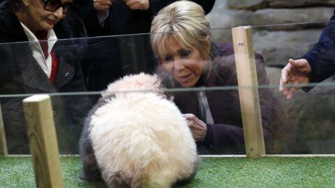 PHOTOS Brigitte Macron a baptisé le bébé panda du zoo de Beauval