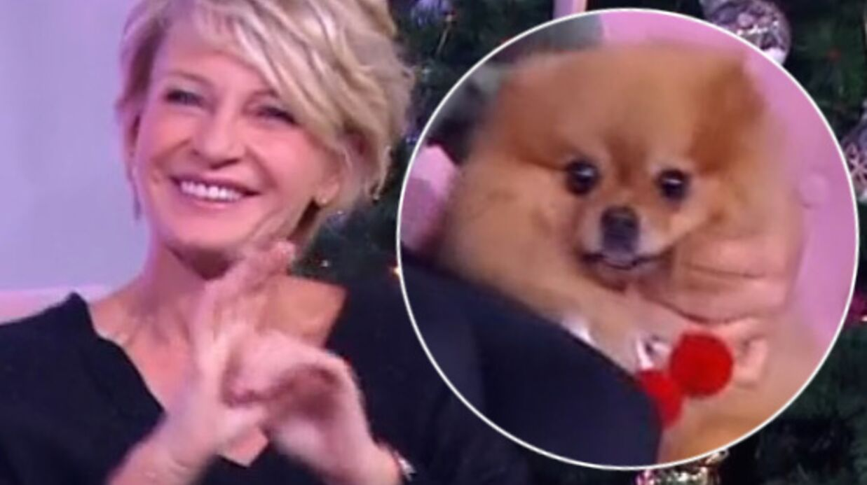 VIDEO Sophie Davant joue avec un chien et finit par se faire mordre en direct