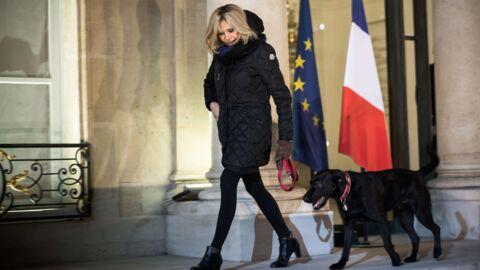 PHOTO Nemo: le chien d'Emmanuel et Brigitte Macron découvre la neige pour la première fois