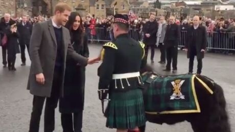 Prince Harry: un poney tente de le mordre, Meghan Markle part en fou rire