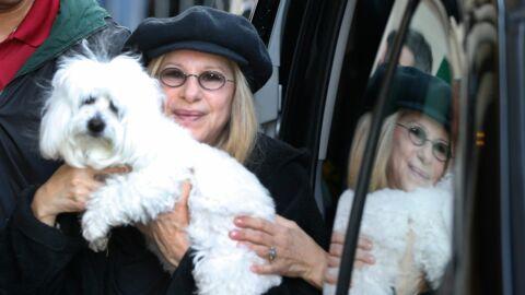 PHOTOS Barbra Streisand a cloné deux fois sa chienne décédée