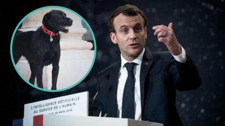 nemo-le-chien-d-emmanuel-macron-martyrise-l-equipe-du-president-dans-le-salon-des-ambassadeurs