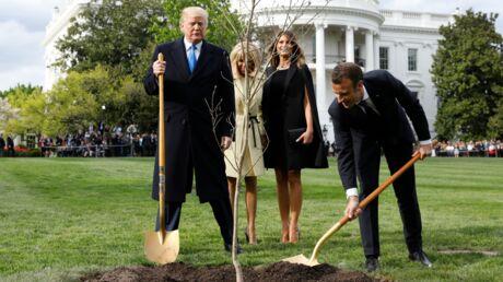 Le chêne planté par Emmanuel Macron et Donald Trump devant la Maison Blanche a disparu, découvrez pourquoi