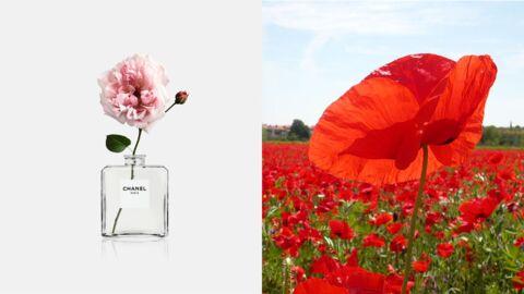 Quand Chanel et Kenzo mettent en avant les fleurs: 2 événements à ne pas louper!