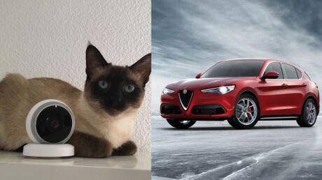 Les crash-tests de Voici: Comment surveiller mes animaux quand je suis absent? Comment choisir entre une berline et un SUV?