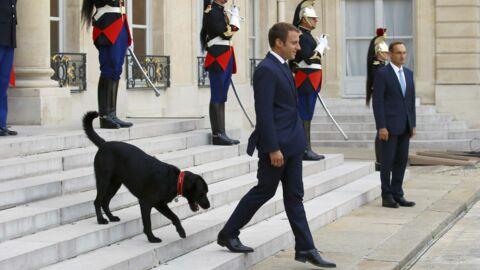 Emmanuel Macron: découvrez les nombreux cadeaux que son chien Nemo a reçus à l'Elysée