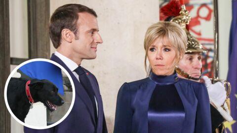 VIDEO Emmanuel Macron: cet honneur accordé à son chien Nemo… et pas à Brigitte!
