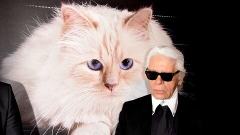 Mort de Karl Lagerfeld: sa chatte Choupette lui rend un vibrant hommage