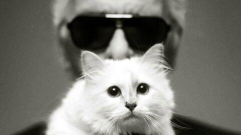Mort de Karl Lagerfeld: qui va récupérer sa chatte, Choupette?