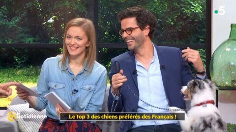 VIDEO La Quotidienne: un chien sème la pagaille dans l'émission de France 5