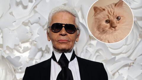 Mort de Karl Lagerfeld: on sait ENFIN qui va s'occuper de Choupette