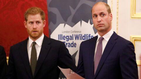 Princes William et Harry: ce projet commun qui pourrait les aider à redevenir complices