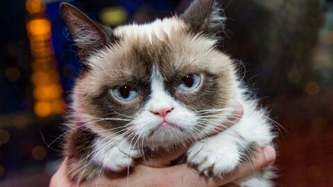 Mort de Grumpy Cat, la chatte la plus célèbre du web, à 7 ans