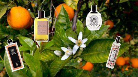 10 parfums à la fleur d'oranger pour un été solaire
