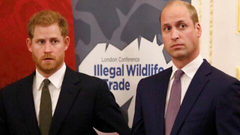 Harry et William fâchés: la véritable raison de leur rivalité