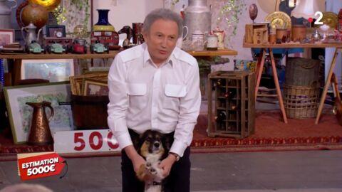 VIDEO Affaire Conclue: Michel Drucker fait craquer les acheteurs grâce à sa chienne