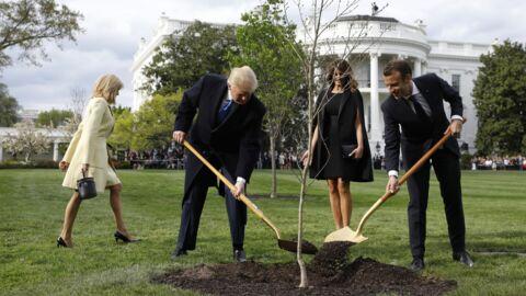 L'arbre symbole de l'amitié entre Emmanuel Macron et Donald Trump est mort