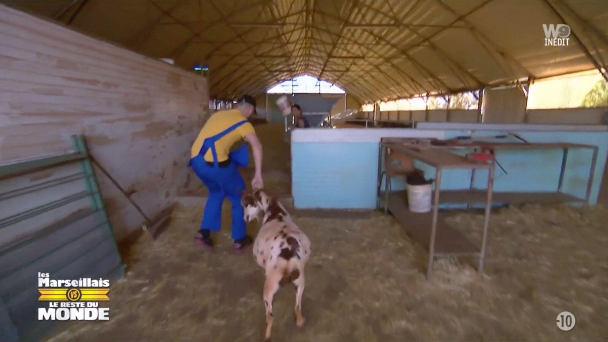 VIDEO Les Marseillais : une chèvre enceinte traînée par le collier pour un jeu, les internautes sont écoeurés