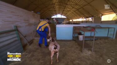«Ça glisse en maltraitance animale»