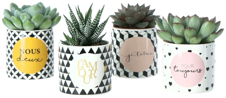 Succulentes. Pots en céramique de 6 cm, Jardiland, 2,95 € chaque
