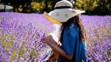 La douceur de la Provence