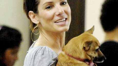 Sandra Bullock: une ceinture de sécurité pour ses chiens