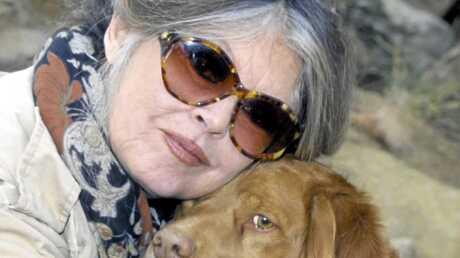 Brigitte Bardot soigne les animaux des SDF à Paris