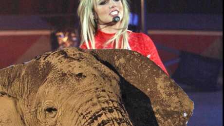 Britney Spears ne maltraite pas les éléphants