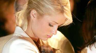 Les amours chiennes
