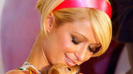 Paris Hilton Retour sur l'affaire du chiot