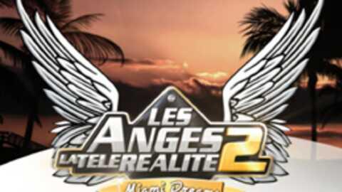 Les Anges de la télé-réalité 2: les candidats choisis par le public