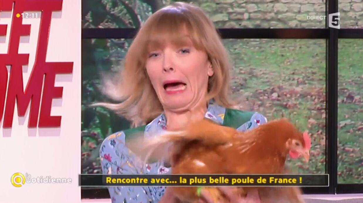 VIDEO Une poule sème la panique sur le plateau de La Quotidienne
