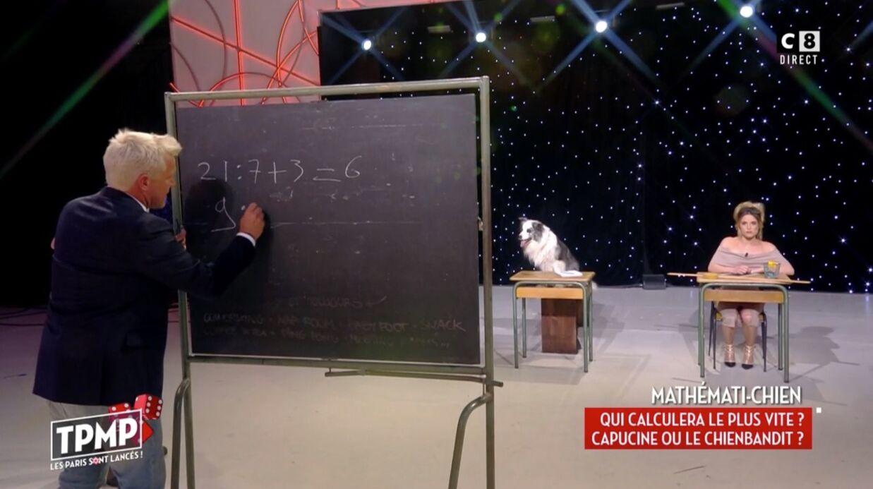 VIDEO Capucine Anav ridiculisée par un chien au calcul mental