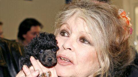 Brigitte Bardot en colère contre l'Américain qui a tué le célèbre lion Cecil