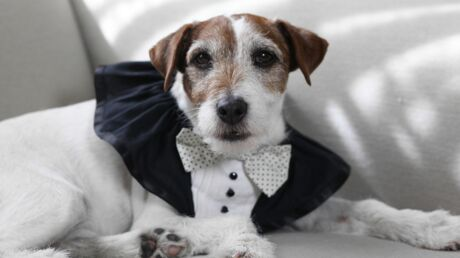 Uggie, le chien de The Artist, invité d'Obama