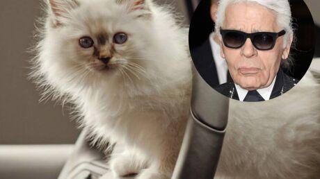 Choupette, la chatte de Karl Lagerfeld, a gagné 3 millions d'euros en 2014