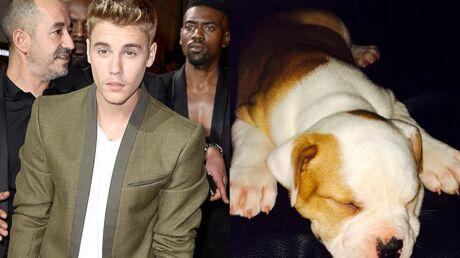 Justin Bieber aurait abandonné son chien