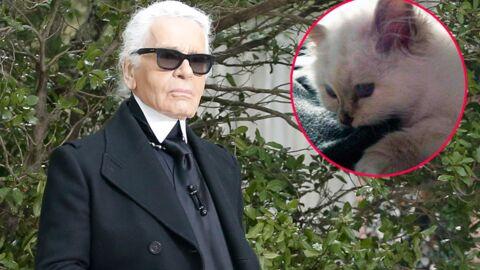 Karl Lagerfeld aimerait se marier avec sa chatte Choupette