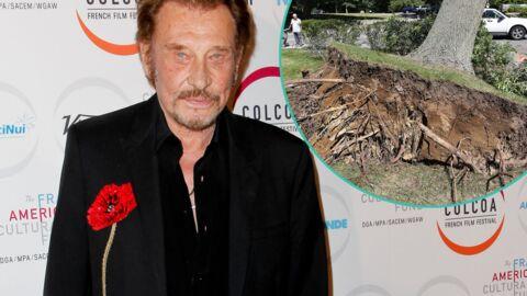 Johnny Hallyday: scandale après l'arrachage de dizaines d'arbres pour accueillir son concert
