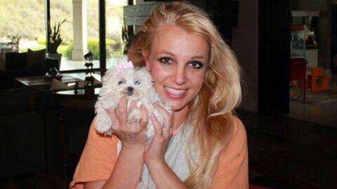 Britney Spears dépense 30 000 dollars par an pour… ses chiens